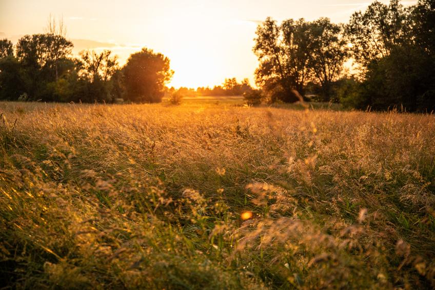 Eine warme briese weht durch ein Grasfeld an einem goldenen Sommer