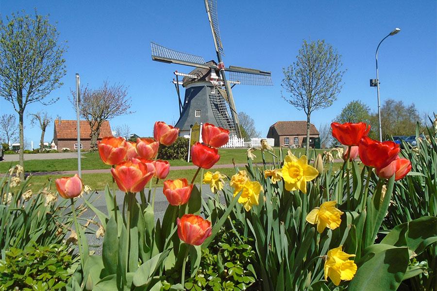 Werdum-Tulpen-Mühle